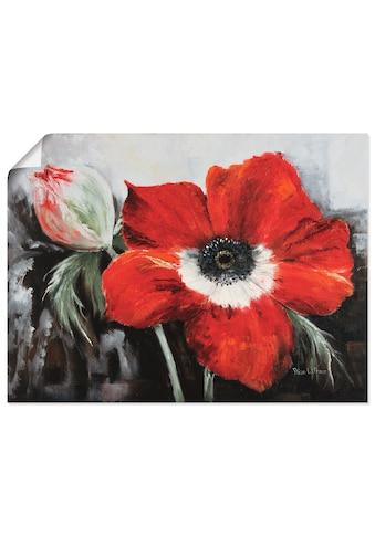Artland Wandbild »Mohnblumen in voller Blüte« kaufen