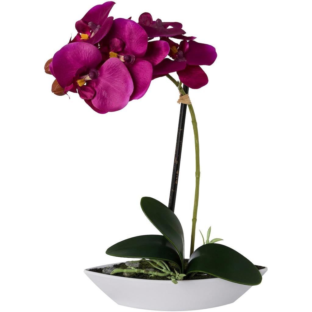 Creativ green Kunstorchidee »Phalaenopsis«, 2er Set, in Kunststoffschale