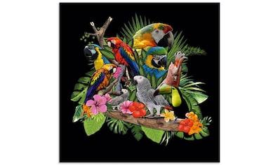 Artland Glasbild »Papageien Graupapagei Kakadu Dschungel«, Vögel, (1 St.) kaufen
