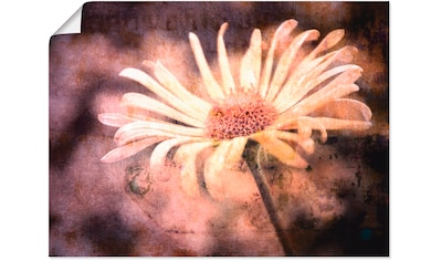 Artland Wandbild »Blume Shabby Chic« kaufen