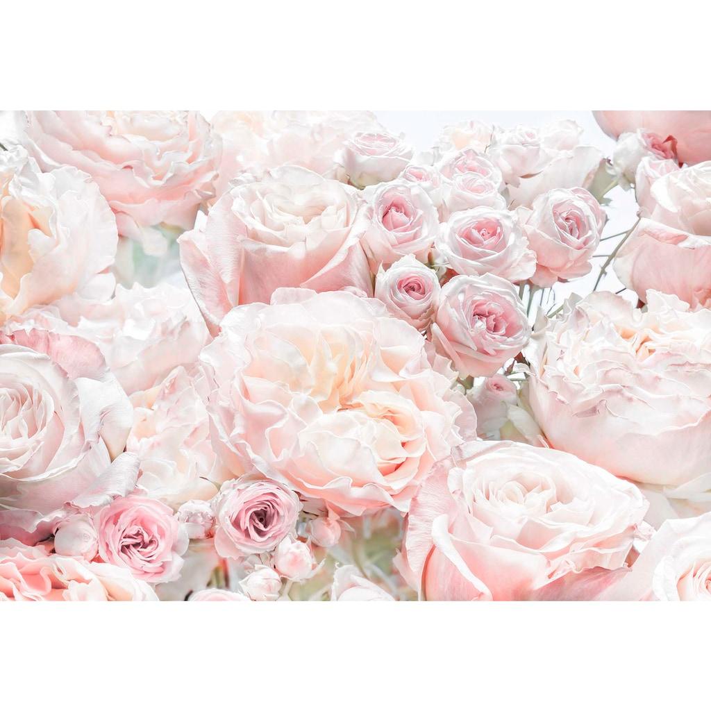 Komar Fototapete »Spring Roses«, bedruckt-Wald-geblümt, ausgezeichnet lichtbeständig