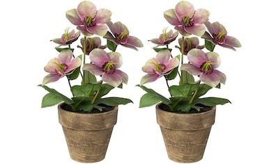 Creativ deco Kunstpflanze, inkl. Übertopf kaufen