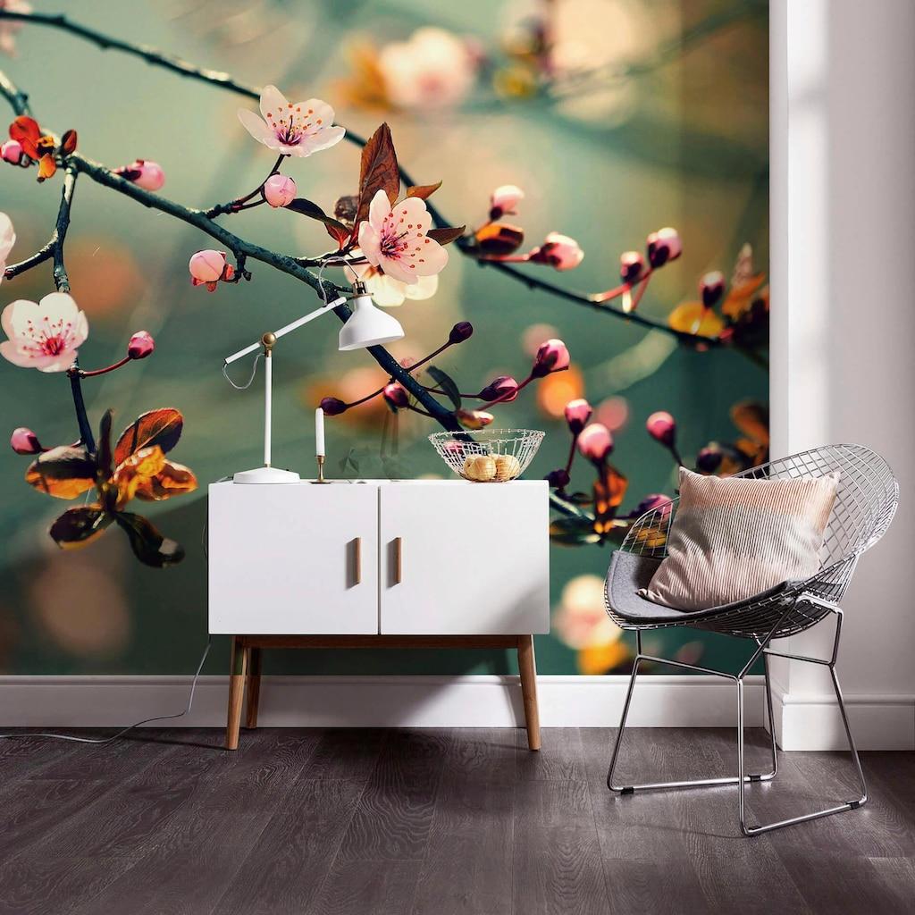 Wall-Art Fototapete »Frühlingserwachen (farbig)«