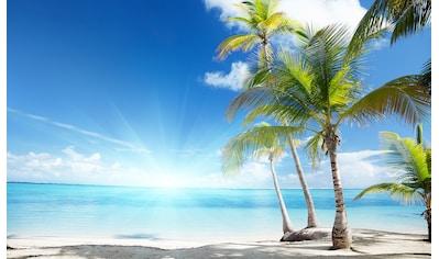 CONSALNET Fototapete »Sonniger Strand mit Palme«, Vlies, in verschiedenen Größen kaufen