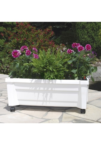 KHW Spalier »Calypso«, BxTxH: 79x35x115 cm, mit Rollen und Bewässerungssystem kaufen