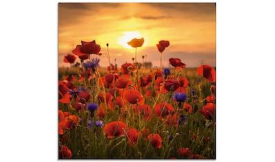 Artland Glasbild »Mohnblumen im Abendlicht«, Blumen, (1 St.) kaufen