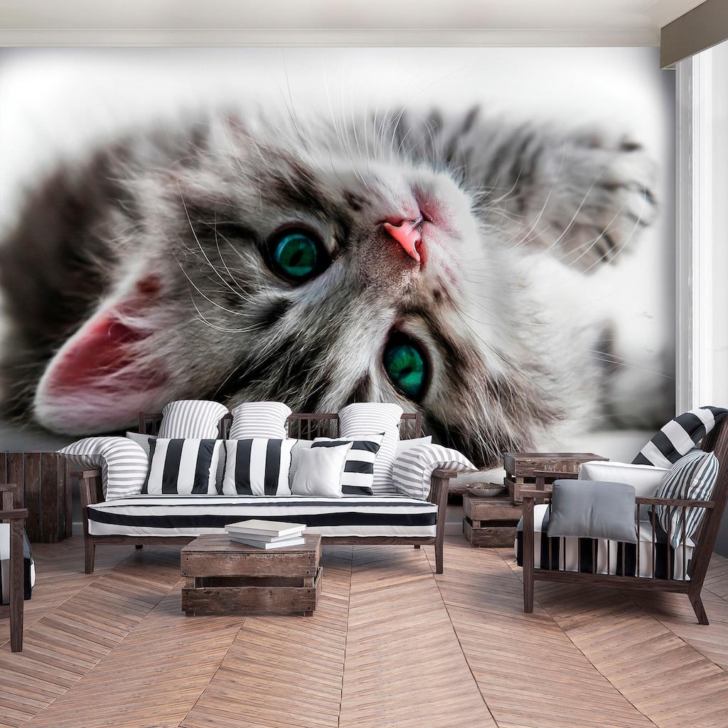 Consalnet Fototapete »Süßes Kätzchen«, Motiv