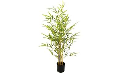 I.GE.A. Kunstbaum »Bambus«, Im Topf kaufen