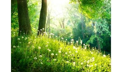 PAPERMOON Fototapete »Green Grass and Trees«, Vlies, in verschiedenen Größen kaufen