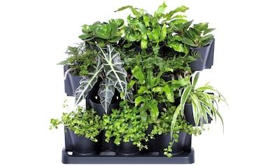 Prosperplast Pflanzentreppe »Cascade Garden«, (1 St.) kaufen