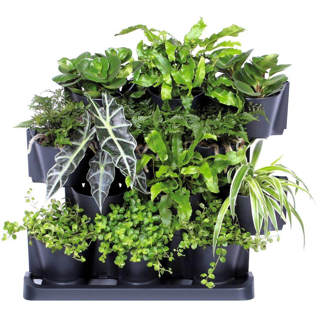 Prosperplast Pflanzentreppe »Cascade Garden«, (1 St.)