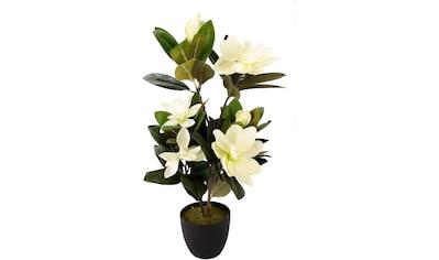 I.GE.A. Kunstbaum »Magnolienbusch«, im Kunststofftopf kaufen