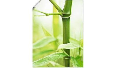Artland Wandbild »Bambus Zweig«, Gräser, (1 St.), in vielen Größen & Produktarten... kaufen