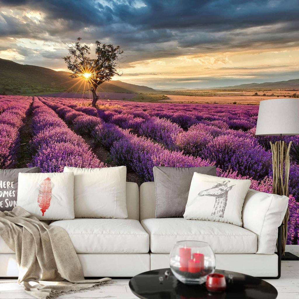Wall-Art Vliestapete »Lavendelblüte in der Provence«