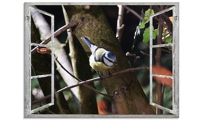 Artland Glasbild »Fensterblick - Blaumeise«, Vögel, (1 St.) kaufen