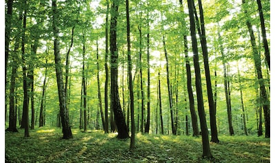 CONSALNET Fototapete »Grüner Wald«, Vlies, in verschiedenen Größen kaufen