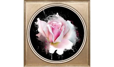 queence Acrylglasbild »Rose« kaufen
