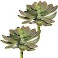 Creativ green Kunstpflanze »Echeveria XL«, 2er Set