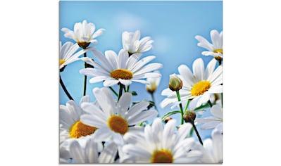 Artland Glasbild »Blumen  -  Margeriten« kaufen