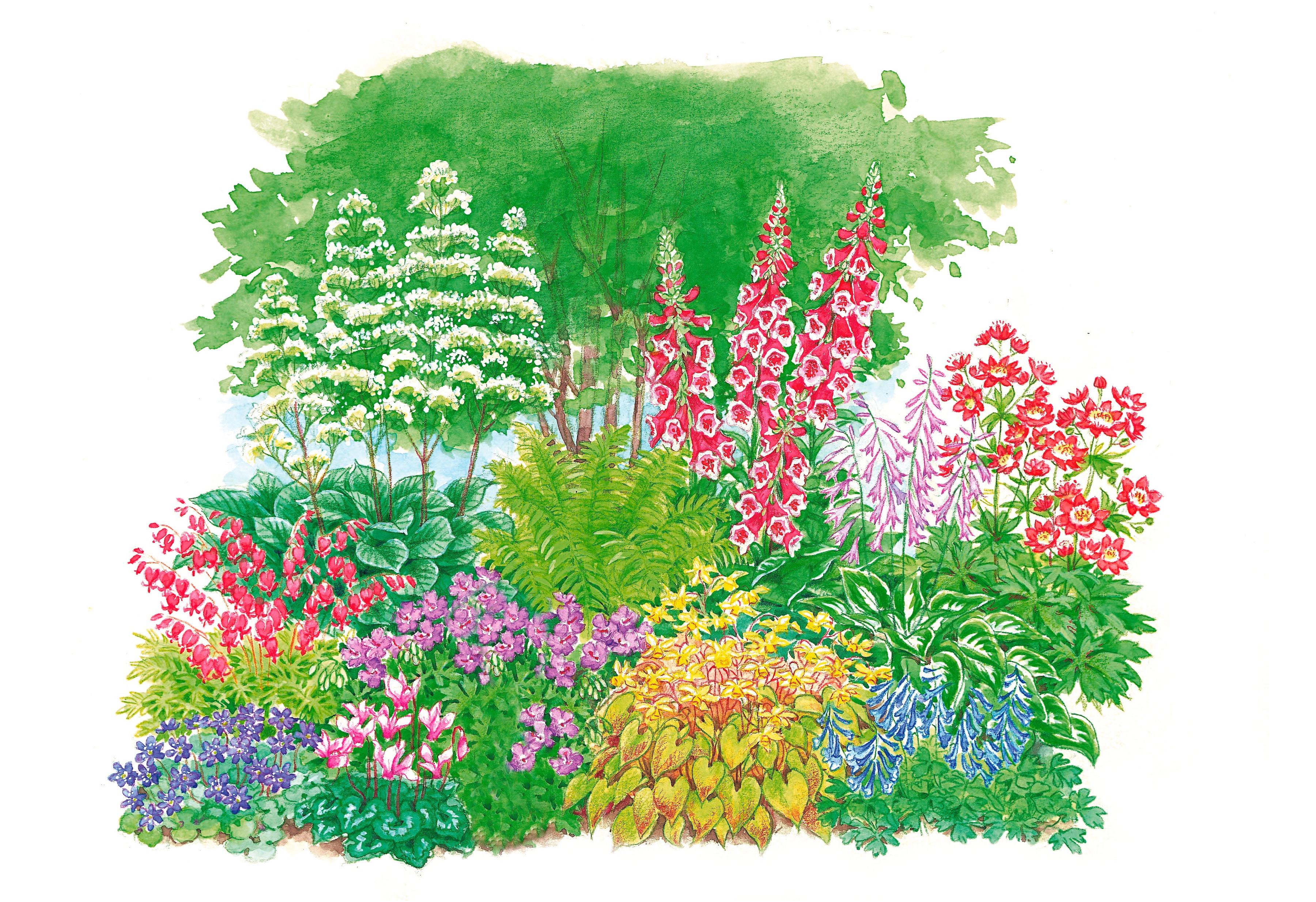 BCM Beetpflanze Schattenpflanzen, 11 Pflanzen TOPSELLER bunt Beetpflanzen Garten Balkon