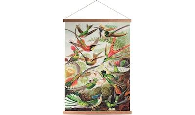 Art for the home Poster »Kolibris«, Vögel, Poster, Wandbild, Bild, Wandposter kaufen