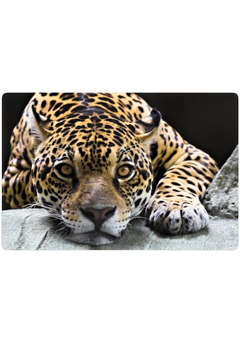 Home affaire Glasbild »Jaguar« kaufen