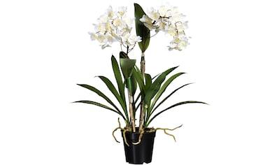 Creativ green Kunstorchidee »Dendrobie« (1 Stück) kaufen