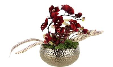 I.GE.A. Kunstorchidee »Arrangement«, In Keramikschale kaufen