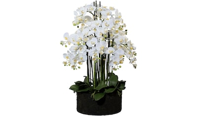 Creativ green Kunstorchidee »Phalaenopsis«, im Erdballen kaufen