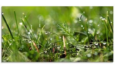 Artland Glasbild »Tautropfen«, Gräser, (1 St.) kaufen
