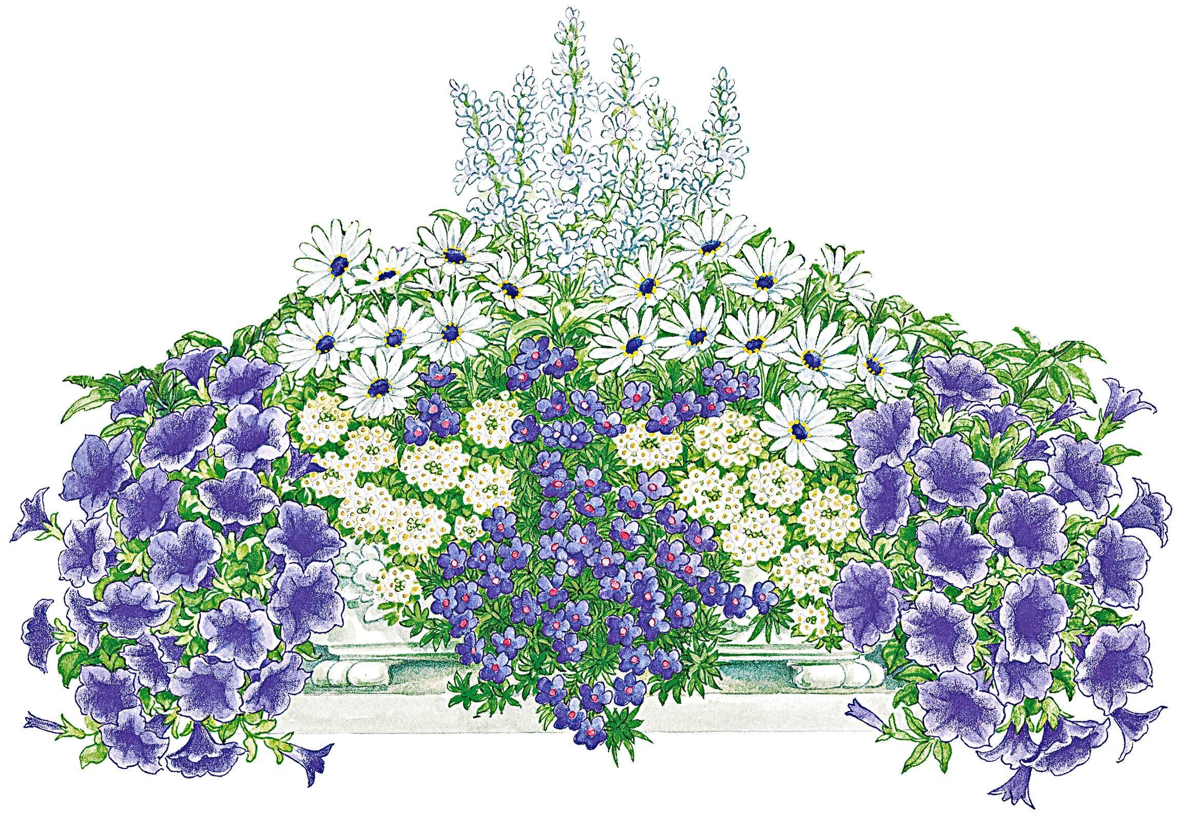BCM Balkonpflanze Blau-Weißer Traum, 16 Pflanzen mit Erde bunt Balkonpflanzen Garten Balkon