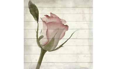 queence Holzbild »Rosen Knospe«, 40x40 cm kaufen