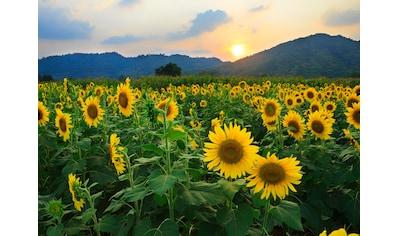 Papermoon Fototapete »Sunflower Field« kaufen