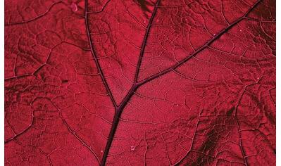 Consalnet Vliestapete »Nahaufnahme rotes Blatt«, botanisch kaufen