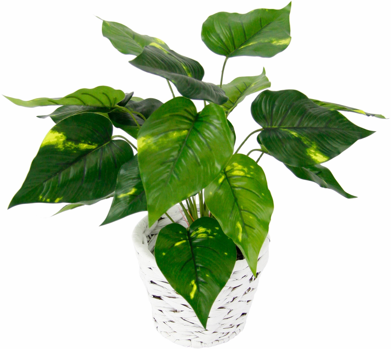 I.GE.A. Kunstpflanze Pothospflanze in Wasserhyazinthentopf (1 Stück) grün Zimmerpflanzen Pflanzen Garten Balkon Kunstpflanzen