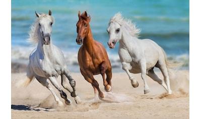 Papermoon Fototapete »Horse Herd Run Gallop« kaufen