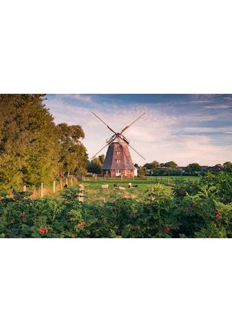 Komar Fototapete »Tage wie Diese«, mehrfarbig-natürlich-bedruckt kaufen