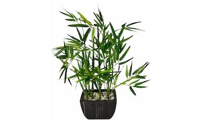 I.GE.A. Kunstpflanze »Bambus« (1 Stück) kaufen