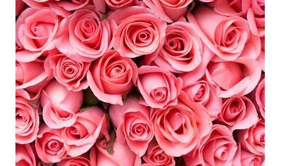 PAPERMOON Fototapete »Pink Rose Flowers«, BlueBack, 7 Bahnen, 350 x 260 cm kaufen
