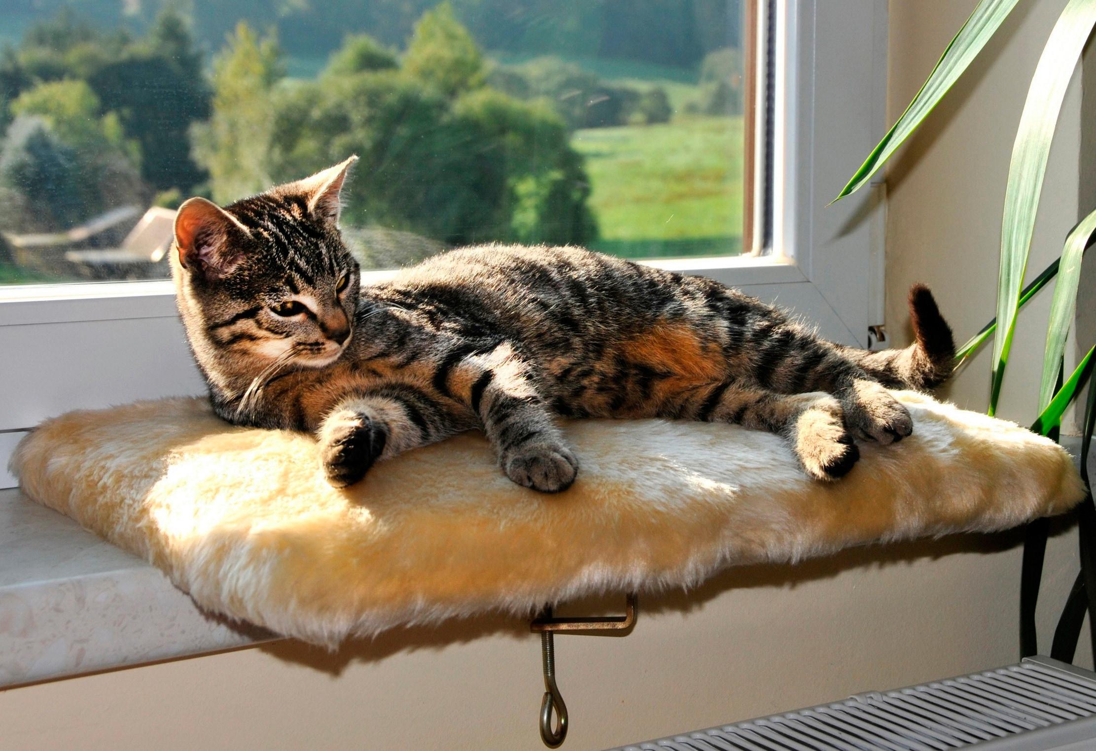 SILVIO design Katzenliege Fensterliege Relax braun Katzenkörbe -kissen Katze Tierbedarf