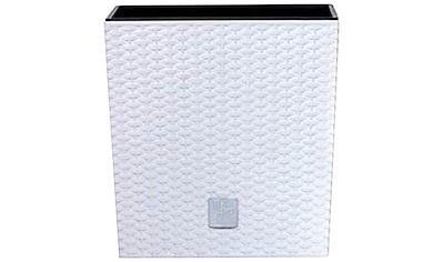Prosperplast Blumentopf »Rato Low 3er Set«, (3 St.), 17x17x27cm kaufen