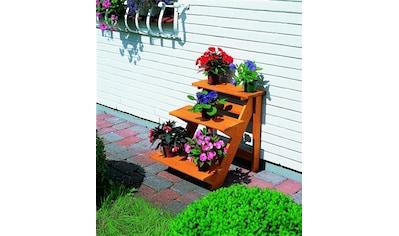 promadino Pflanzentreppe »Blumentreppe klein«, BxTxH: 50x60x56 cm kaufen