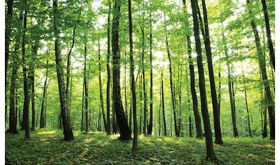 CONSALNET Fototapete »Grüner Wald«, Papier, in verschiedenen Größen kaufen