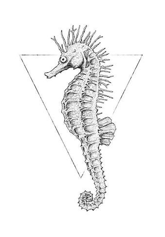 Komar Poster »Sea Horse White«, Tiere, Höhe: 70cm kaufen