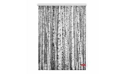 LICHTBLICK Seitenzugrollo »Klemmfix Motiv Birken«, Lichtschutz, ohne Bohren, freihängend, bedruckt kaufen