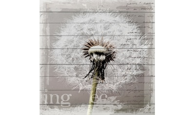 queence Holzbild »Pusteblume«, 40x40 cm kaufen