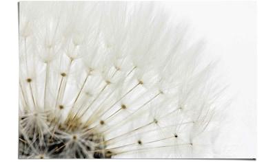 Reinders! Poster »Pusteblume Weiß«, (1 St.) kaufen