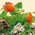JUWEL AQUARIEN LED Aquariumleuchte »Nature 6500K«, Warmweiß