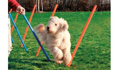 Heim Hunde - Slalomstäbe »Dog Agility Slalom« kaufen