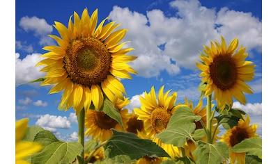 Papermoon Fototapete »Sonnenblumen«, Vliestapete, hochwertiger Digitaldruck kaufen